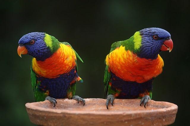 Australien-Highlights