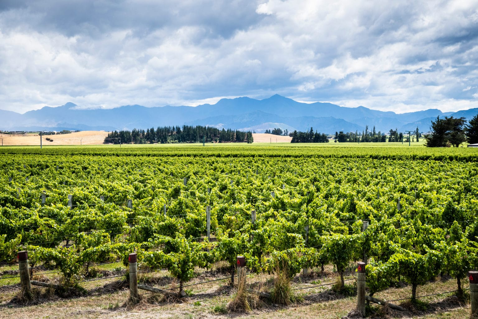 Scenic view of Marlborough wine destination in New Zealand