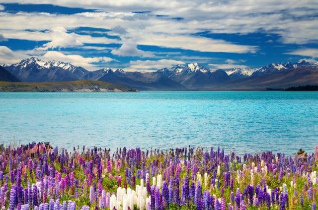 Aktivitäten in Neuseeland